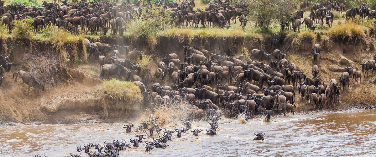 Wilde-Beest-Migration-in-Masaai-Mara-National-Reserve